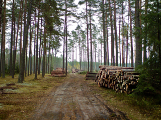 Lietuvos miskai